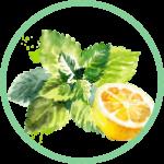 Citrus-mäta